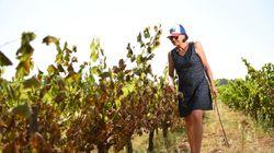 BLOG - Les vignes brûlées dans le Sud ne sont pas une calamité