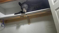 Surprise, un ours dans le