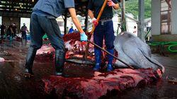 Japón retoma la caza de ballenas 30 años