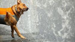 Detenida la dueña de un perro que murió en la terraza por un golpe de