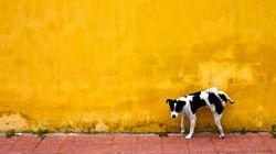 El Ayuntamiento de Almería obliga desde este lunes a los dueños de mascotas a retirar sus orines en la