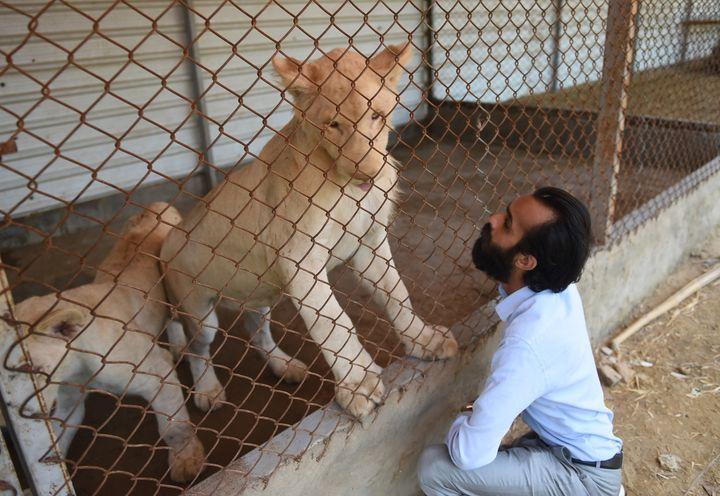 Bilal Mansoor Khawaja auprès de l'un de ses lions.