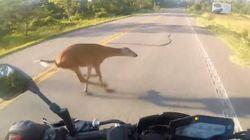 Un motorista choca contra un ciervo en mitad de la