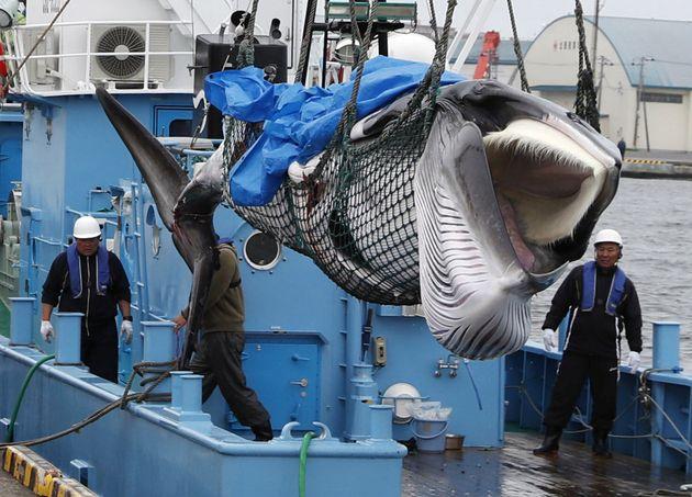 Γιατί σκοτώνουν τις φάλαινες οι