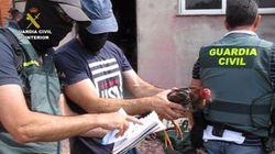 Trece detenidos por peleas clandestinas de gallos en Tordesillas