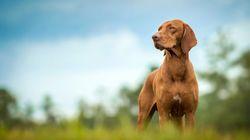 Βόλος: Άφησαν σκύλο να πεθάνει κλειδωμένος σε