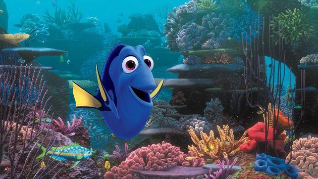 """""""Le Monde de Dory"""": ce poisson est le meilleur exemple pour comprendre les troubles de la mémoire immédiate"""