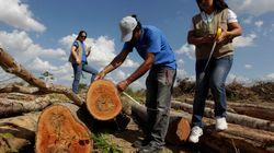 Com extinção do Fundo Amazônia, 'direito de desmatar' avança no