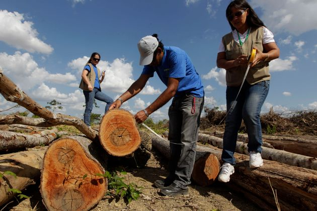 Desmonte do Fundo Amazônia impacta políticas de preservação da