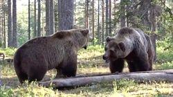 「過去最高のクマの戦い」決闘の瞬間を激写 唸り、近づき、取っ組み合い..(動画)