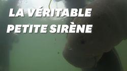 Ce bébé dugong est devenu une star en Thaïlande après s'être lié à des