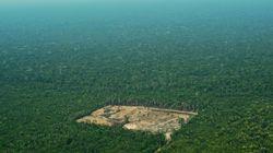 Ο Μπολσονάρο καταστρέφει τον Αμαζόνιο - Αύξηση κατά 88% της αποψίλωσης του δάσους μόνο τον