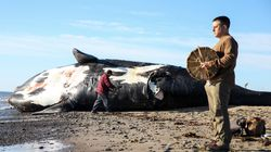 Scientists Fear Extinction After Six Rare Right Whales Die In A
