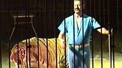 Τίγρεις σε τσίρκο στην Ιταλία κατασπάραξαν τον θηριοδαμαστή