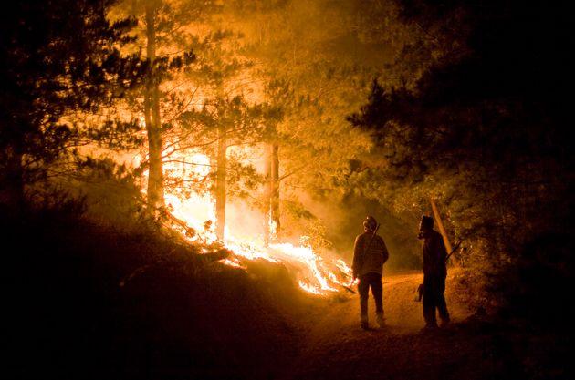 Baisse de 60% des superficies brûlées par les incendies de forêts au premier semestre
