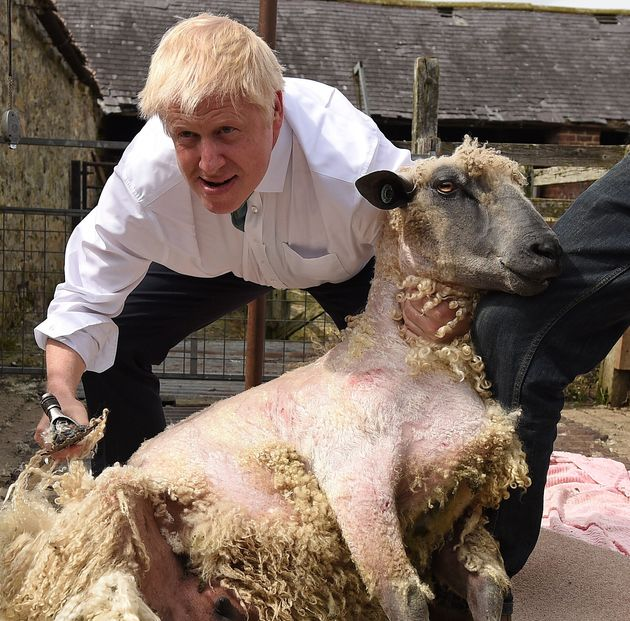 Sheep May Die In A No-Deal Brexit, Boris Johnson