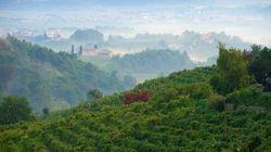 Le colline del Prosecco sono patrimonio