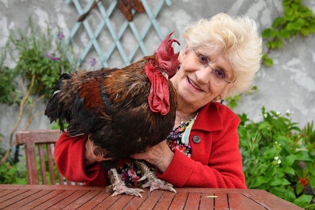 프랑스의 어느 섬에 사는 '닭' 한 마리를 두고 재판이