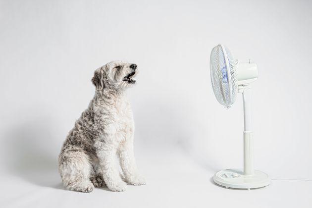Anche il vostro cane soffre il caldo, non lasciate mai nulla