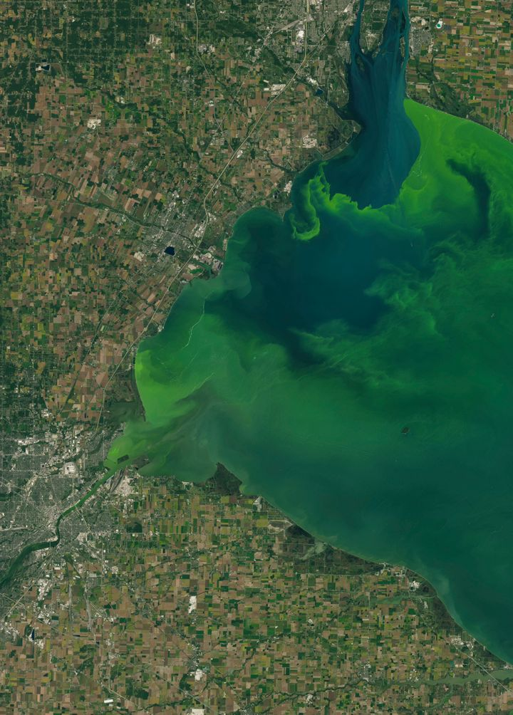 Less than 1% of algal blooms actually produce toxins, though they can be harmful to the environment in other ways. A satellit