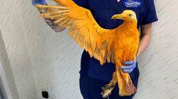 영국의 한 고속도로에서 발견된 오렌지색 새의