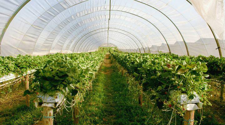 la Fédération nationale des agriculteurs biologiques (FNAB) dit non aux serres chauffées