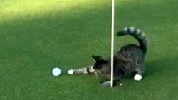 Golf Cat Absolutely Will NOT Let You Play Through So Don't Even Think About