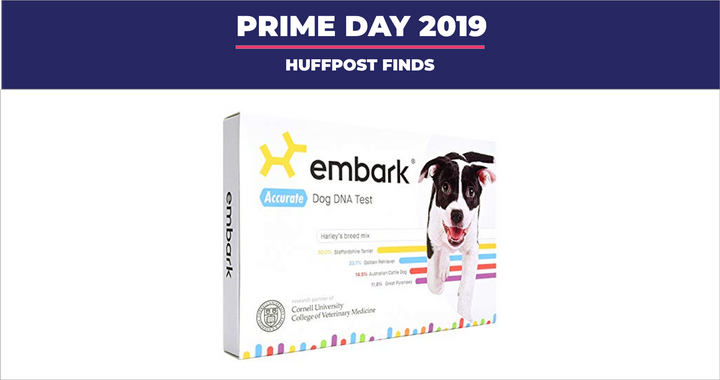 "Earlier this year, we compared <strong><a href=""https://amzn.to/2lJMJjL"" target=""_blank"" rel=""noopener noreferrer"">two of the leading dog DNA test kits</a></strong> and dubbed the <strong><a href=""https://amzn.to/2lJMJjL"" target=""_blank"" rel=""noopener noreferrer"">Embark DNA</a></strong> test as our favorite for the kit&rsquo;s detailed breed information, easy-to-use DNA collection swab and fun added feature"