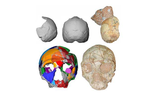 En haut, les fragments de crâne Apidima 1 (Homo sapiens) et sa reconstruction. En dessous, le crâne...