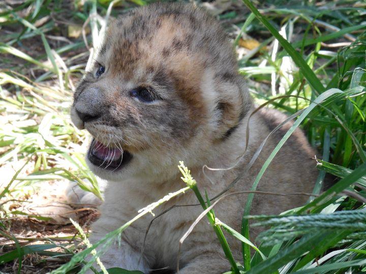 O parque na África Oriental é reconhecido pela diversidade de vida selvagem.
