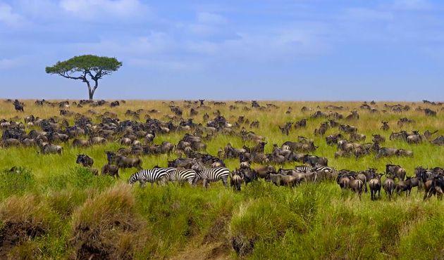O local também recebe milhares de animais em busca de tranquilidade para se