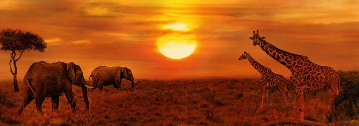 O parque africano é uma das regiões que mantêm a vida selvagem preservada.
