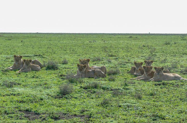 Além de leões, outro animais como hipopótamos, elefantes, hienas e girafas podem ser vistos no local.