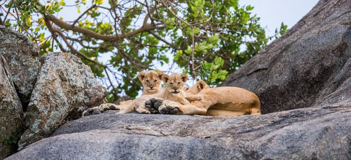 """O nome Serengeti significa """"imensas planícies""""."""