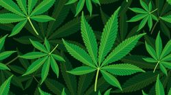 Researchers Think They Know Why Weed Makes Some People Happy And Others