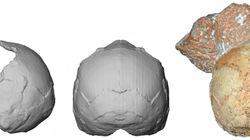 Kρανίο 210.000 ετών στη Μάνη - Το αρχαιότερο δείγμα σύγχρονου ανθρώπου στην