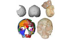 Homo Sapiens est arrivé en Europe quatre fois plus tôt qu'on ne le