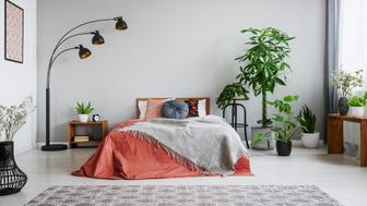 Urban jungle in bedroom with double bed, lamp and carpet, real photo with copy space on the wall