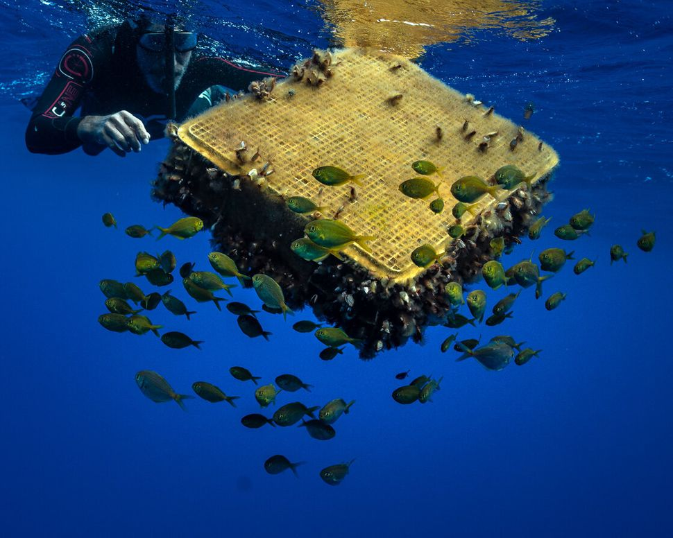 Swimmer Ben Lecomte finds a plastic crate surrounded by fish.