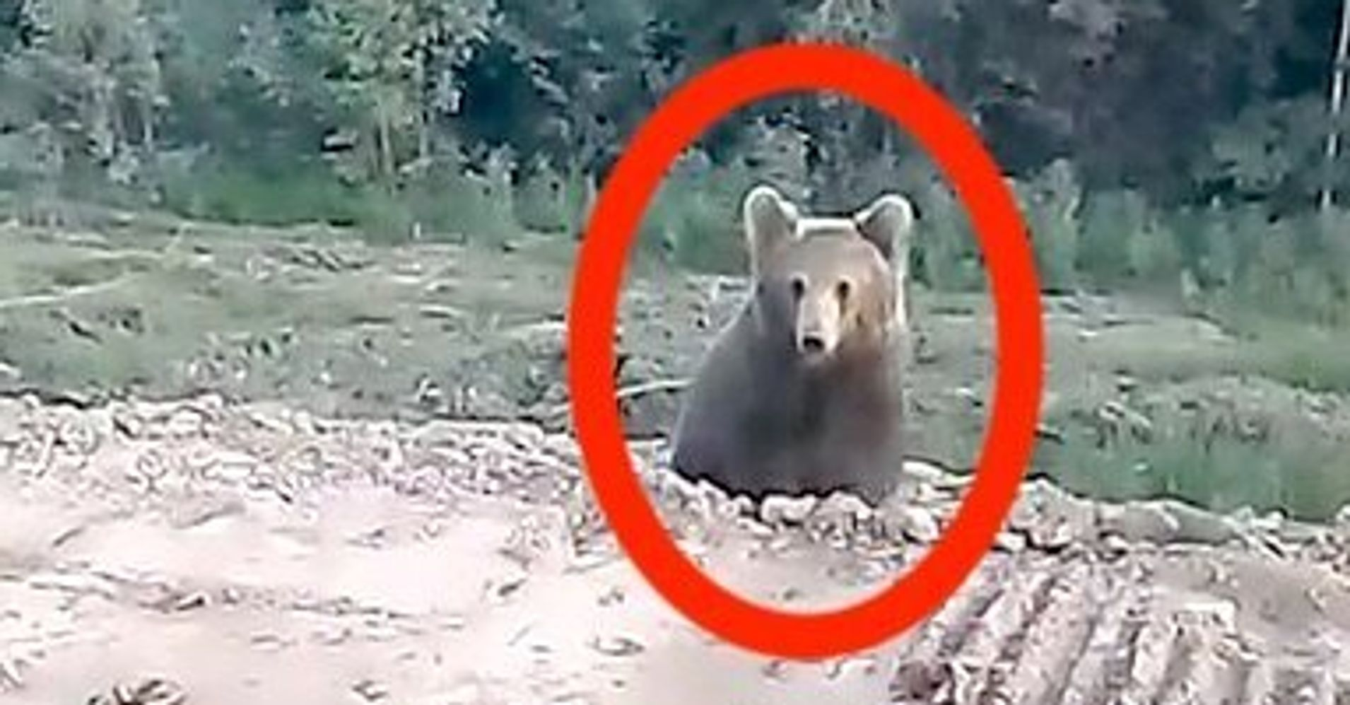 Westlake Legal Group 5d26ca582600004a00044191 Here's How Quickly A Seemingly Adorable Bear Can Turn On You