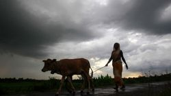 Above Average Monsoon Rains This Week Brings Hope For