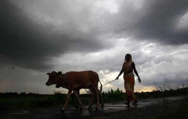 Above Average Monsoon Rains This Week Brings Hope For