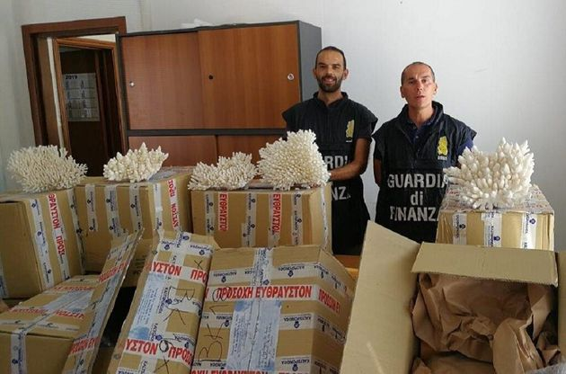 Coral being smuggled from Greece to France were detected by the Italian Guardia di Financa during customs...