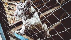 More Than 10,000 Wild Animals Seized In Massive Interpol Anti-Smuggling