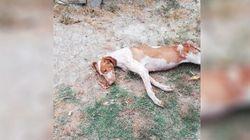Fragolina, la cagnolina abbandonata quattro volte che si è lasciata morire di