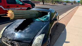 This photo provided by the Northwest Fire District shows where a driver escaped injury when his car's windshield was pierced by the trunk of a saguaro cactus during a wreck Wednesday, July 10, 2019 on the outskirts of Tucson, Ariz. Pima County sheriff's Deputy Daniel Jelineo said the black sports car struck the cactus while crossing a median before ending up on the other side of a road and that the cactus ended up slamming into the car's windshield. (Northwest Fire District via AP)