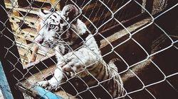 인터폴과 세계관세기구가 밀수 소탕 작전으로 야생동물 1만 마리 이상을