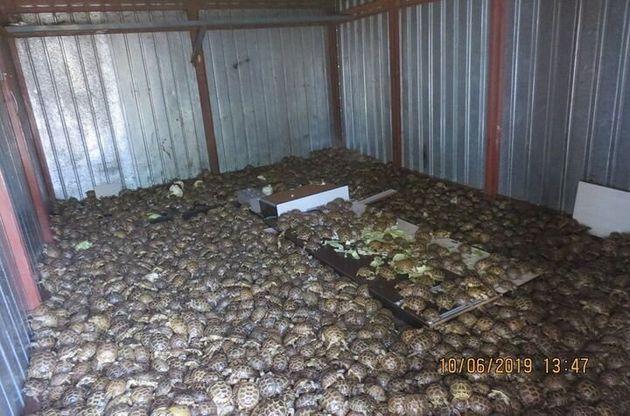 러시아 당국이 카자하스탄에서 온 컨테이너에서 4,100마리의 거북을 발견,