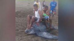 La última estupidez humana: grabarse subido a lomos de una tortuga gigante en