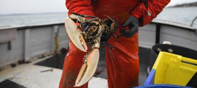 Image de pêche au homard en